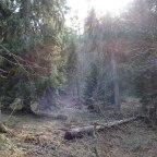 Chartreuse – Col de porte – L'impact de l'Homme sur la biodiversité