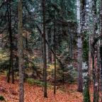 Vercors – La forêt, richesse du montagnard – Dimanche 28/07